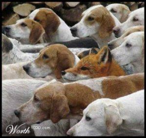 foxindogs